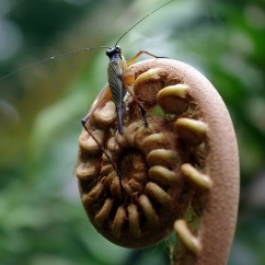 insecte BQ